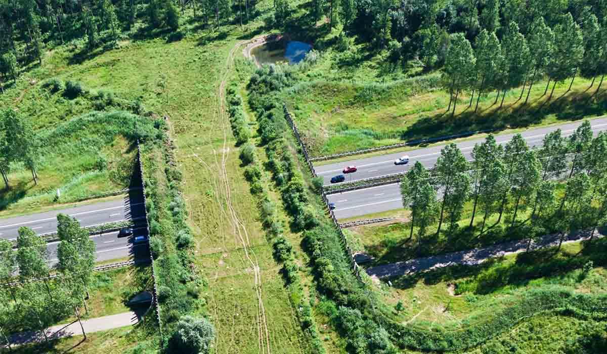 Un ponte per l'attraversamento animale vicino Madrid è divenuto il simbolo delle infrastrutture verdi